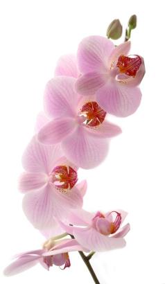 Косметика orchid